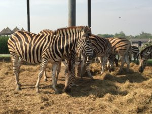 サファリワールド,Safari World,バンコク,動物園,日帰り,観光,ツアー,旅行,家族連れ,子供連れ,おすすめ,スポット,サファリパーク,