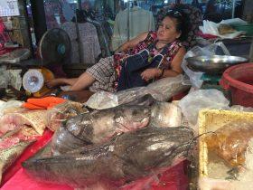 Naklua Fish Market,ランプ―マーケット,ナクルアマーケット,ローカル市場,タイ,パタヤ,魚,魚介類,マーケット,