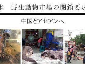 タイ,バンコク,動物,ペットショップ,市場,閉鎖,